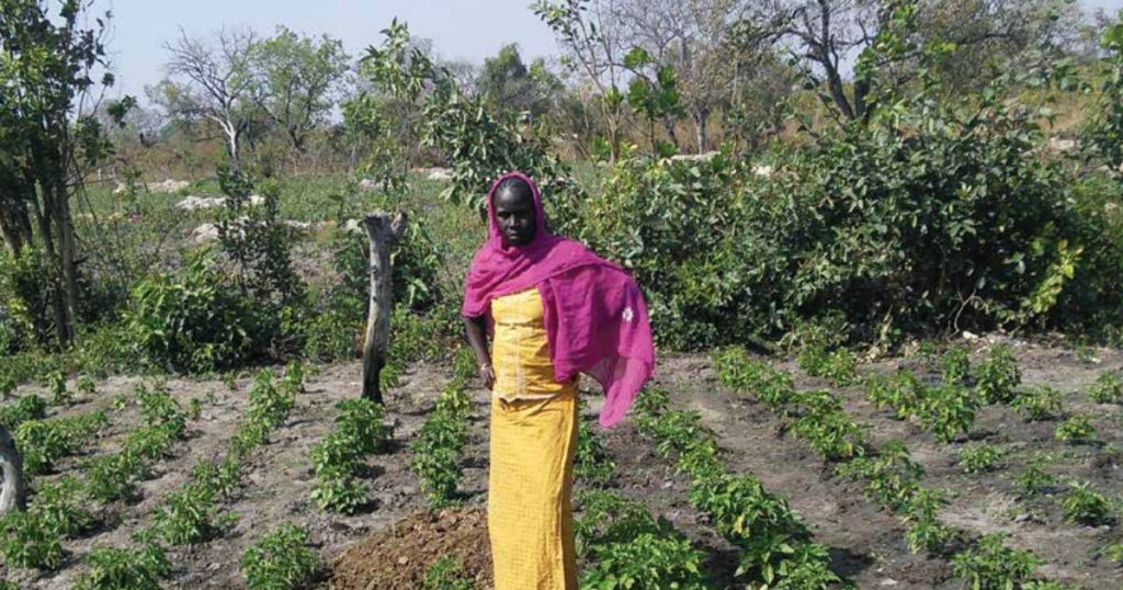 Evaluating Farming for Food Security with Peace Corps/Senegal